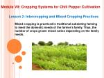 module vii cropping systems for chili pepper cultivation12