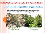 module vii cropping systems for chili pepper cultivation4