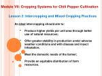 module vii cropping systems for chili pepper cultivation5