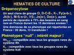 hematies de culture