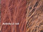 activity 2 roll