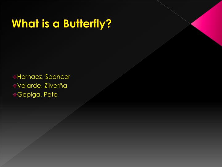 what is a butterfly n.