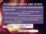 accessory glands and semen