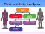 divisions of the nervous system4
