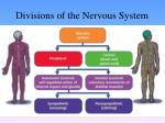 divisions of the nervous system5