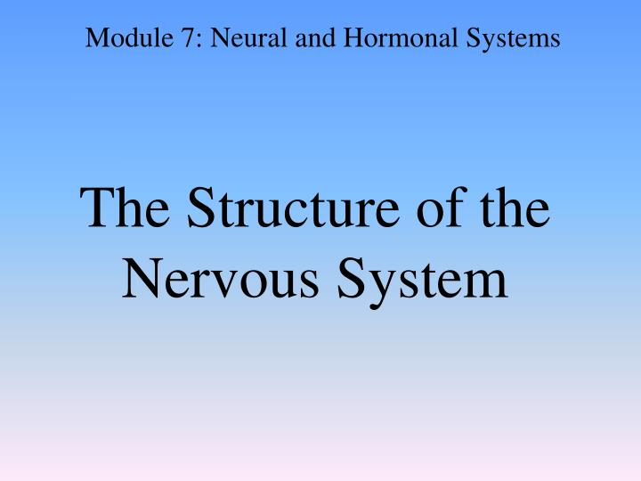 the structure of the nervous system n.