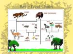 basic food chain