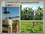 community agricultural fields