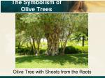 the symbolism of olive trees3