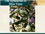 the symbolism of olive trees5