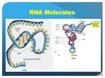 rna molecules