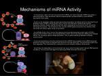 mechanisms of mirna activity