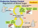 regulation of blood sugar