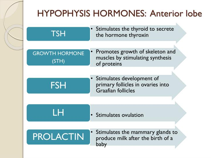 HYPOPHYSIS HORMONES:  Anterior lobe