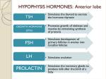 hypophysis hormones anterior lobe