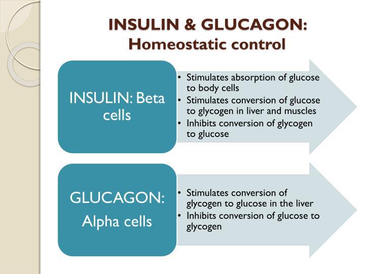 INSULIN & GLUCAGON: Homeostatic control