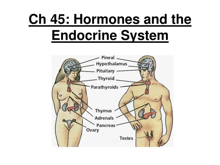 ch 45 hormones and the endocrine system n.