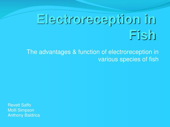 electroreception in fish n.