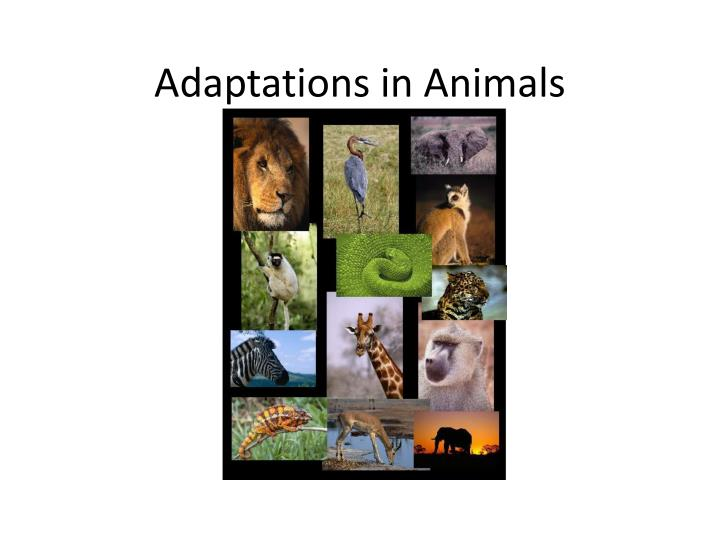 adaptations in animals n.