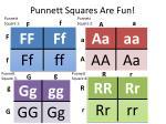 punnett squares are fun