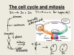the cell cycle and mitosis