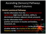 ascending sensory pathways dorsal columns