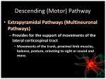 descending motor pathway