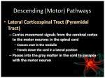 descending motor pathways