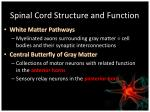 spinal cord structure and function