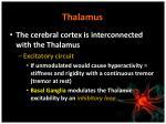 thalamus1