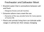 freshwater and saltwater meet