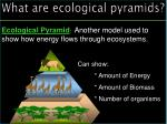 what are ecological pyramids