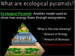 what are ecological pyramids1