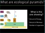 what are ecological pyramids3