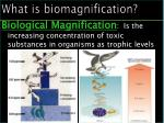 what is biomagnification