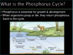 what is the phosphorus cycle