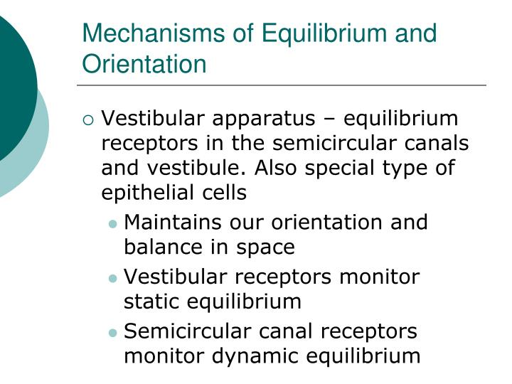 Mechanisms of Equilibrium and Orientation
