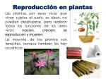 reproducci n en plantas1