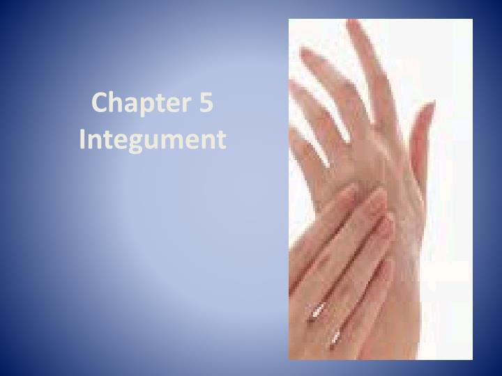 chapter 5 integument n.