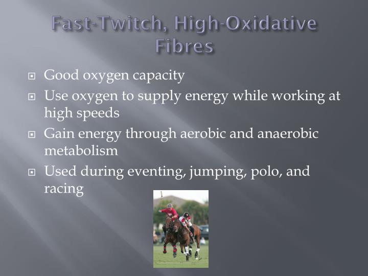 Fast-Twitch, High-Oxidative