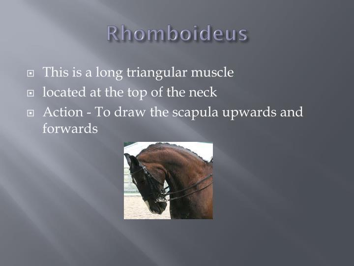 Rhomboideus