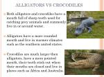 alligators vs crocodiles