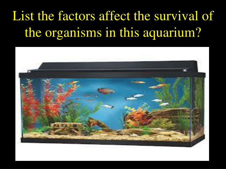 List the factors affect the survival of the organisms in this aquarium?
