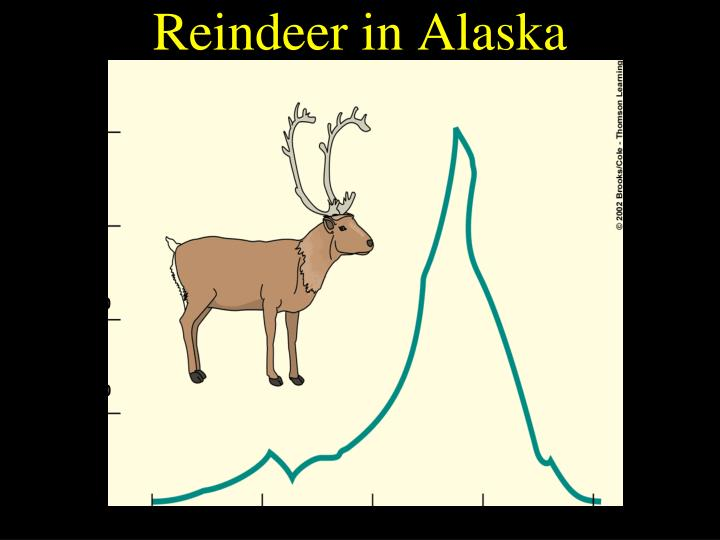 Reindeer in Alaska
