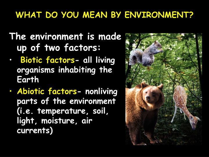 WHAT DO YOU MEAN BY ENVIRONMENT?