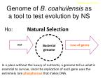genome of b coahuilensis as a tool to test evolution by ns