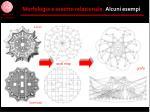 morfologia e assetto relazionale alcuni esempi