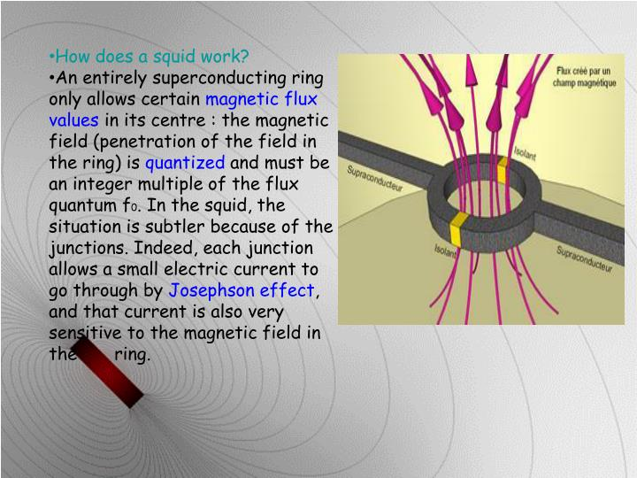 How does a squid work?