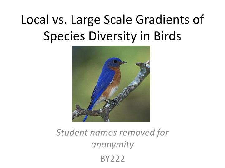 local vs large scale gradients of species diversity in birds n.