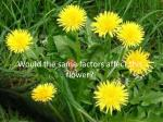 would the same factors affect this flower